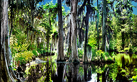 Isaac benzur swamps large wall pictures canvas art prints for Cypress gardens mural